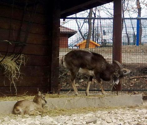 zoo bor-Bora*S-12042012807eeee