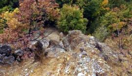TamoiOvde-387960_kraljevo-10--kamena-uma-10--foto-n.-boovi_f