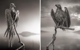 Okamenjene ptice, 2